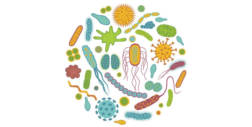 Видове пробиотици и тяхното действие в нашия организъм